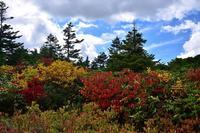 みちのく八幡平秋景色 - みちのくの大自然