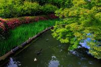 サツキ咲く梅宮大社 - 花景色-K.W.C. PhotoBlog