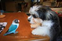 B.B&Chipo*「食べちゃうからねっ!」 - FUNKY'S BLUE SKY