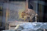 ダッシュの朝 - 動物園へ行こう
