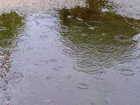 雨ですなァ - 星の小父さまフォトつづり