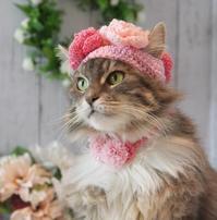 お花の帽子被ったにゃ! - 愛しき猫にゃん♪