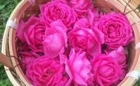 10月2日のバスツアー - 元木はるみのバラとハーブのある暮らし・Salon de Roses