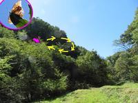 クモガタヒョウモンの占有行動 - 秩父の蝶