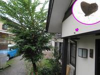 自宅にクロヒカゲ来訪 - 秩父の蝶