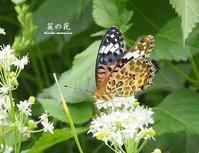 長月自選句まとめ(no.2のみ) - HAIKU/autumn PHOTO