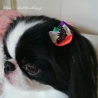 ハロウィンの犬リボン☆犬の健康・ヒトの健康 - 狆の茶々丸