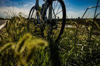 台風一過の真夏日 - ゆるゆる自転車日記♪