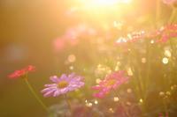 夕日に輝く - Pastel color