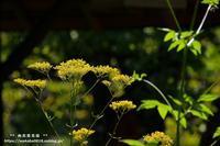 向島百花園で秋の七草の4種類を撮影(^^♪ - 自然のキャンバス