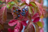 我が家の秋色 - 晴れ時々そよ風