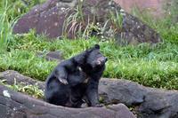 足ギター - 動物園へ行こう