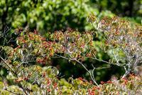 ミゾソバの花と虫たち - あだっちゃんの花鳥風月