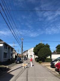 10月の始まりは - 秋田犬「大和と飛鳥丸」の日々Ⅱ