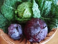 リンゴのダイエットケーキと紫キャベツのサワー漬け - コテージ便り