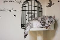ニトリのウォールステッカーの寿命。 - Living with Cats*