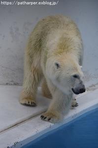 2018年9月熊本市動植物園その1クラッグとミミカに再会 - ハープの徒然草