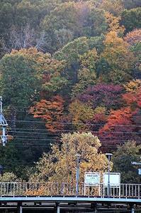 藤田八束の鉄道写真@北海道の秋は早い、北海道の秋と列車達・・・北海道の秋は美しい、そこに列車が走るこれが自然がくれた贈り物だ - 藤田八束の日記