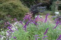 珍客と親指姫のバラ - ペコリの庭 *