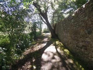 ドイツメルヘン街道を行く⑤いばらひめとラプンツェルのお城 -
