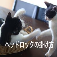 にゃんこ劇場「プロレスごっこ」 - ゆきなそう  猫とガーデニングの日記