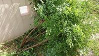命の洗濯日 - 優駿、大樹の下で和を奏でる~平屋暮らし*時々handmade~