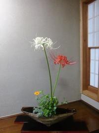 民藝の佐々木梅治と彼岸花 - 活花生活(2)