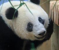 上野動物園混雑回避して起きているシャンシャンに会うためにすべきこと3つ - 動物園のど!