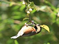 今日の鳥さん181001 - 万願寺通信