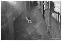 三毛猫 - BobのCamera