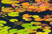 自然の織り成す色 - Digital Photo Diary