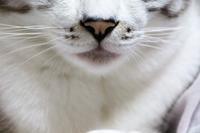 ネタ探し - ぎんネコ☆はうす