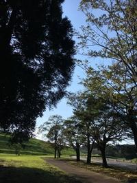 自然の木 -  日々-yori