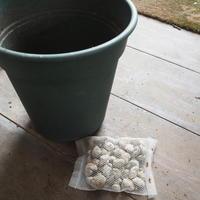 鉢底石の工夫 - sola og planta ハーバリストの作業小屋