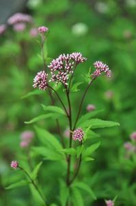 庭の花と蝶 - 川の流れのカンツカブログ