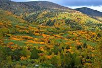 みちのく紅葉景色 - みちのくの大自然