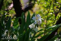 向島百花園に咲いていた草花!!! - 自然のキャンバス