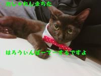 テル君と音雄君 - 八幡地域猫を考える会