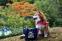 秋だなぁ~! - 写心食堂