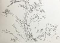 柴又帝釈天のお茶席に展示。 - 『一日一畫』 日本画家池上紘子