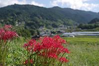 彼岸花と案山子の里へ - Wakaba photos