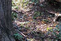 秋の 臭覚 ・ 聴覚 ・ 視覚 - 野山の住認たちⅡ