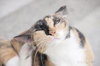 ご近所猫 2018.09.30 - Rayblade Photos