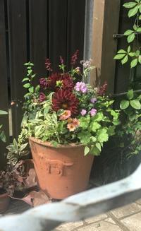 ダリア黒蝶の寄せ植え - 小さな庭 2