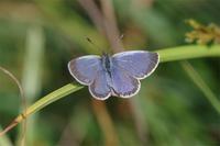 都会の傍で - 蝶と蜻蛉の撮影日記