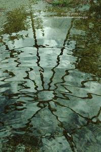 雨上がりに。。。 - It's only photo 2