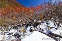 冬の到来 - Digital Photo Diary