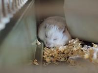 野良寝するマルたん (Criceto) - エミリアからの便り