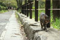 哲学と猫の道。 - advance