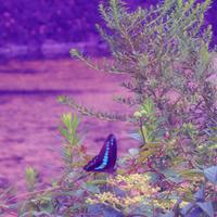 蝶々もいるよ。プレミアな野草ウォッチング by 皇居のお堀周辺3 - poem  art. ***ココロの景色***